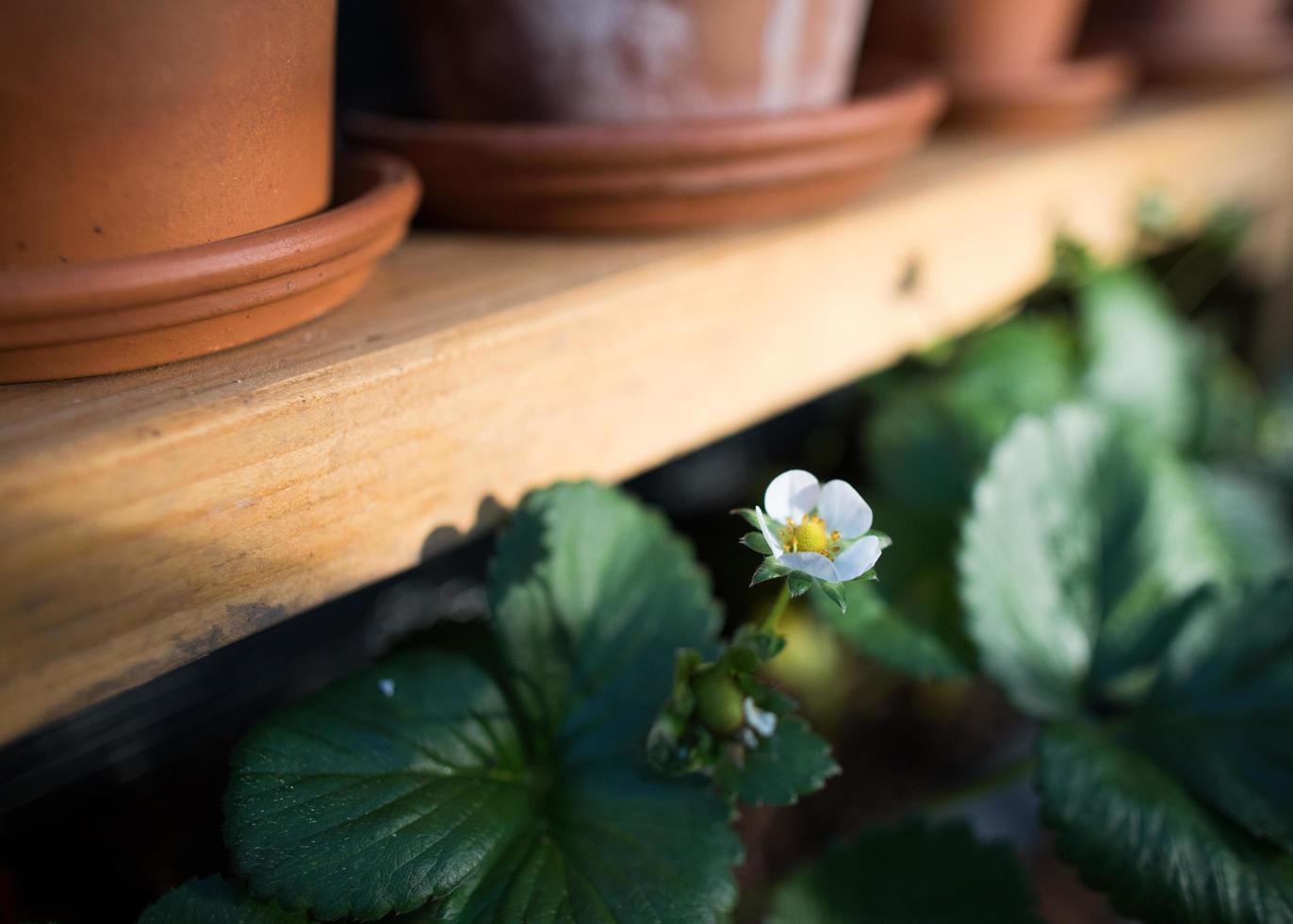 visão macro de uma flor iluminada pelo sol foto