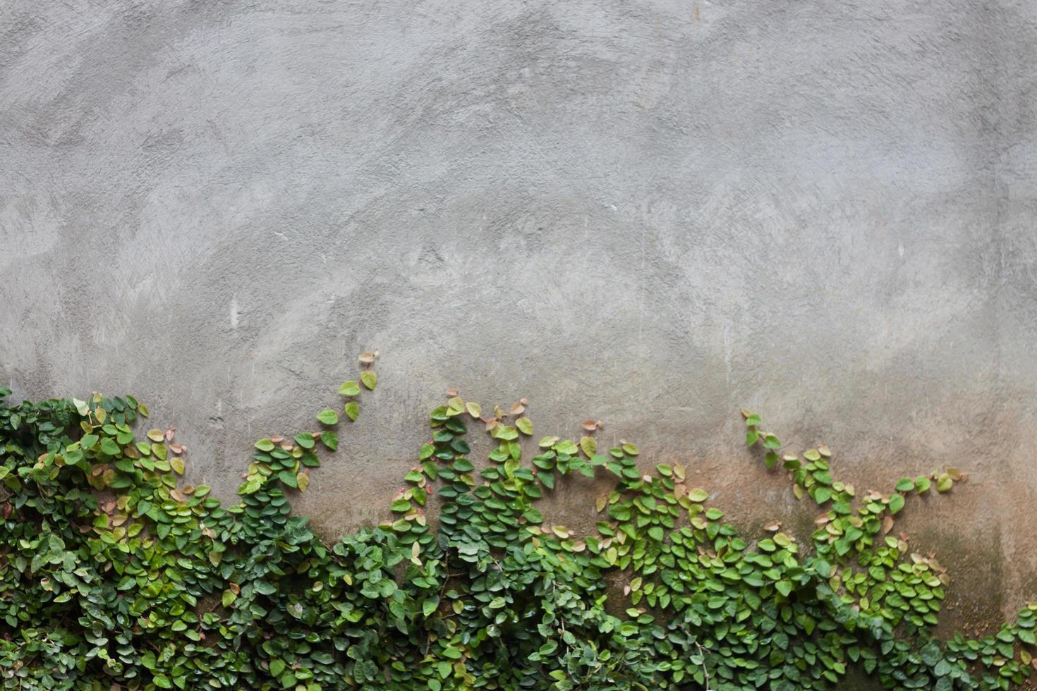 folhas verdes na parede de tijolos foto