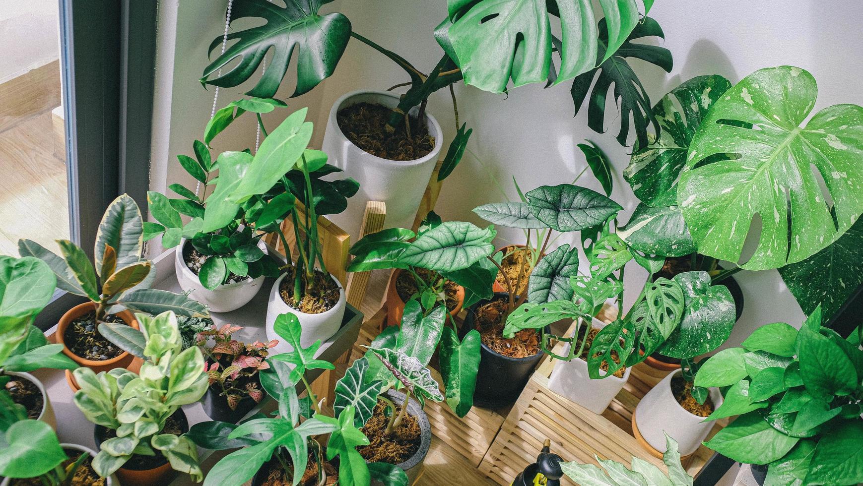 vasos de plantas perto de uma janela foto