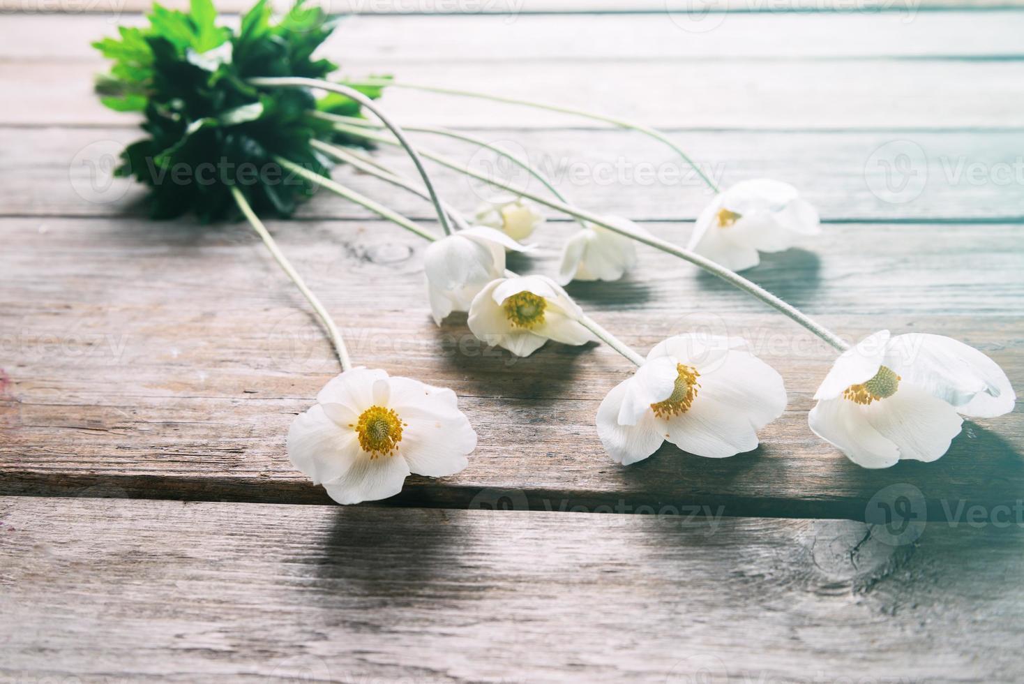 flores de anêmona branca foto