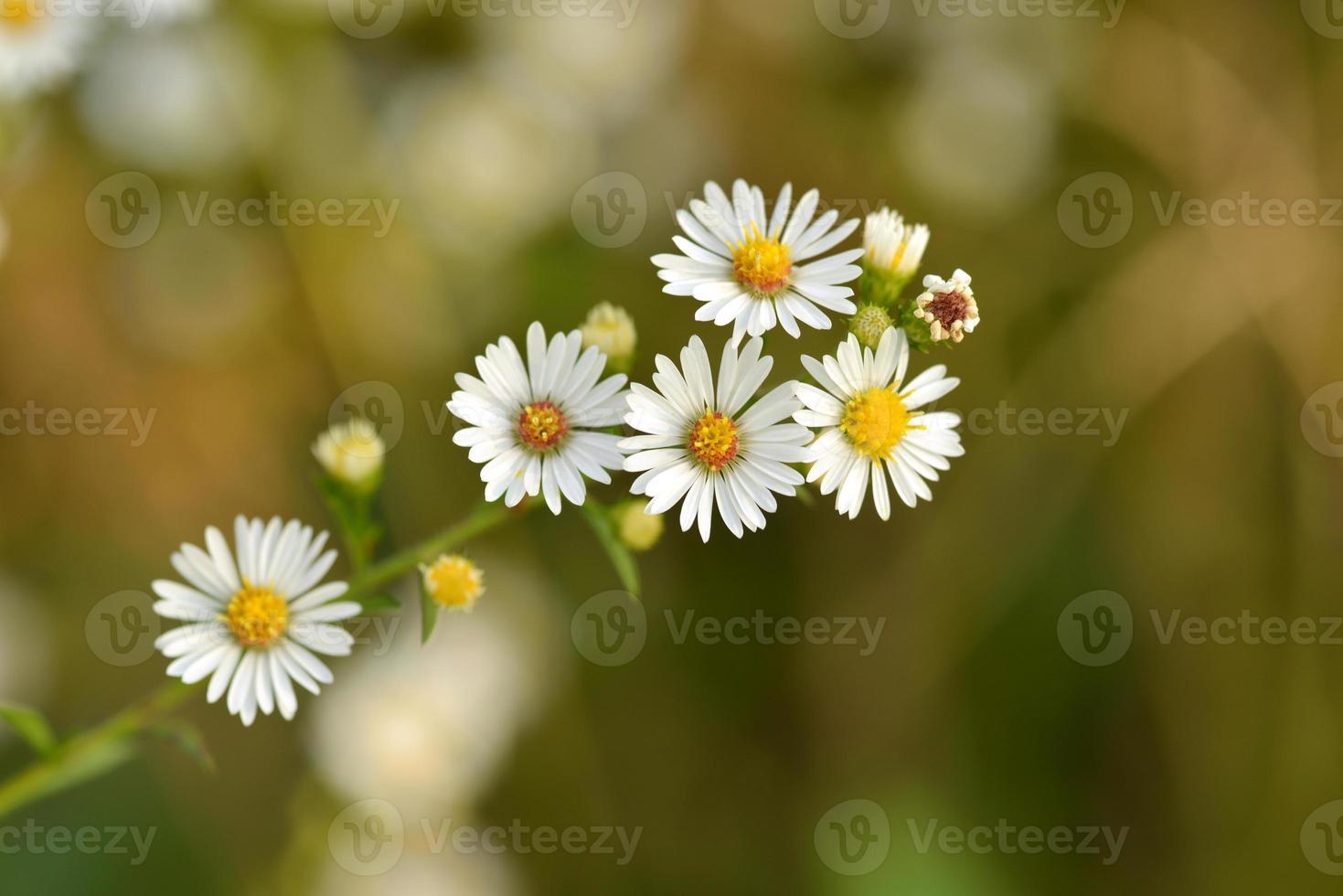 Flor branca foto