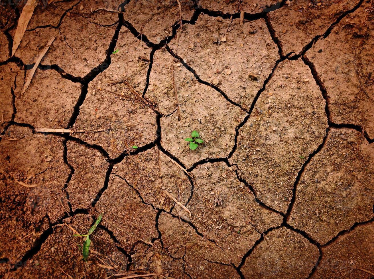 crescimento entre solo rachado foto