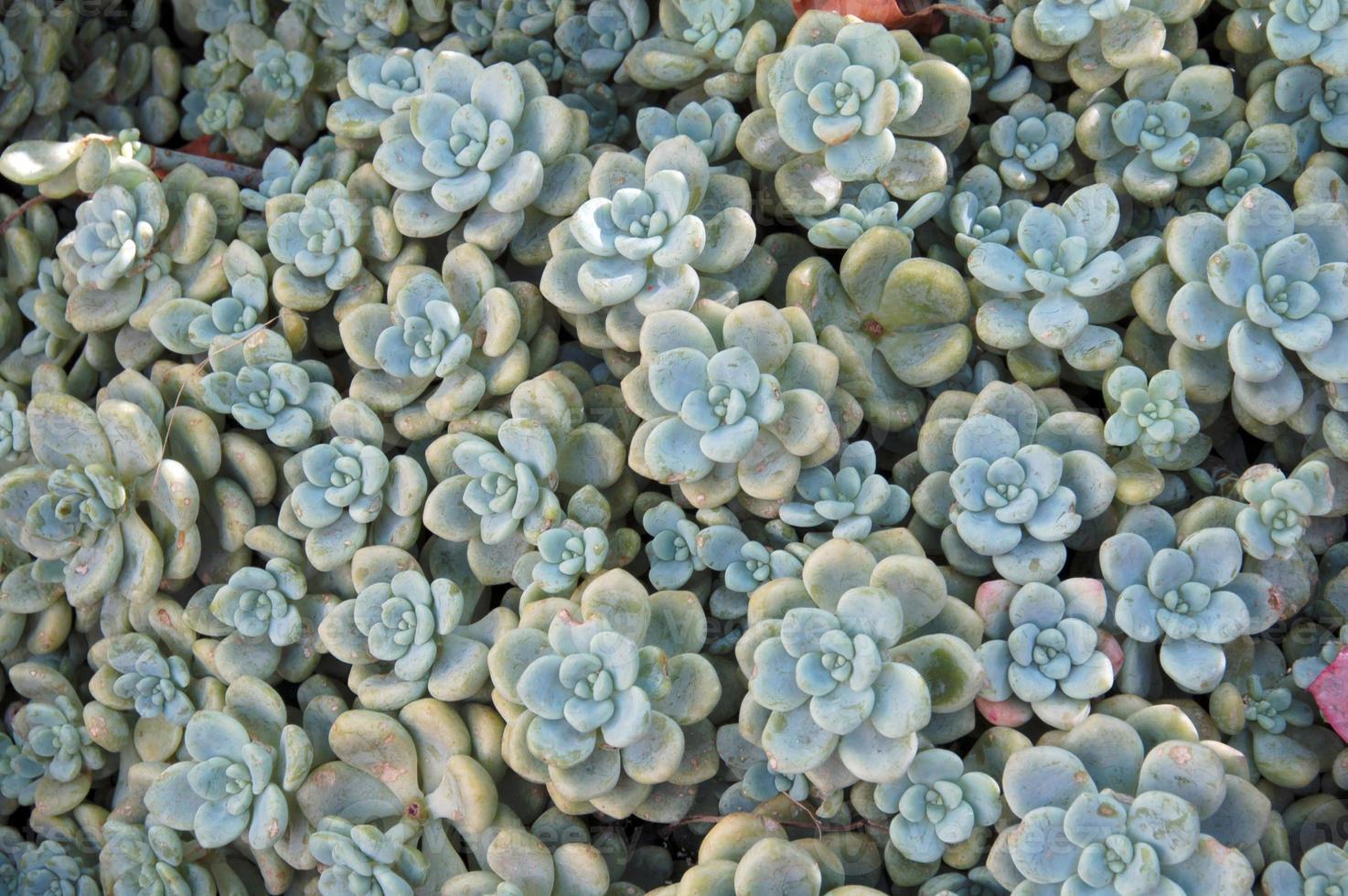 conjunto de plantas suculentas foto