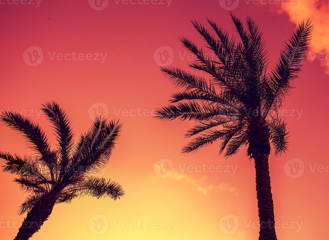 palmeiras tropicais vintage contra o céu ao pôr do sol foto