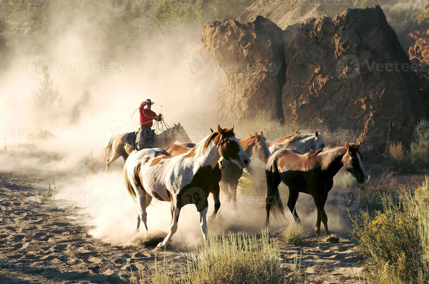 sonhos de cowboy foto