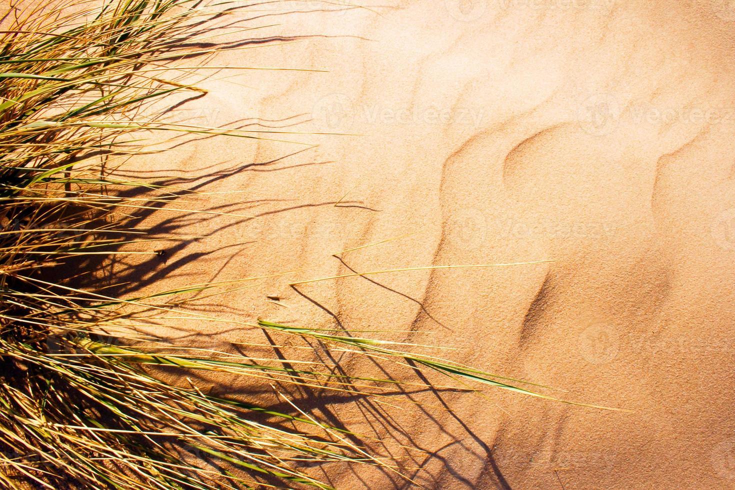 grama soprada pelo vento na duna de areia. foto