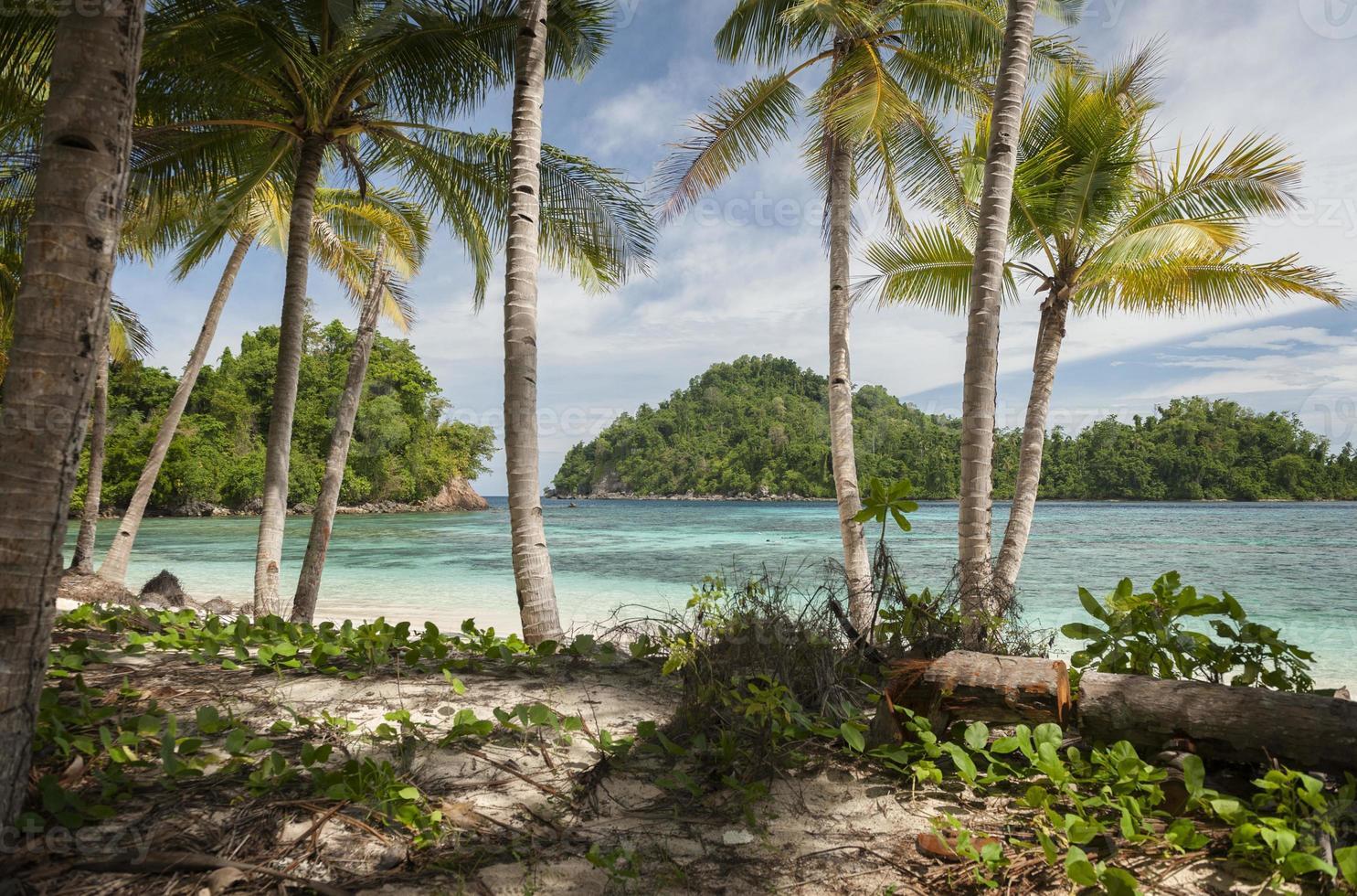 Ilha Potil, Indonésia foto