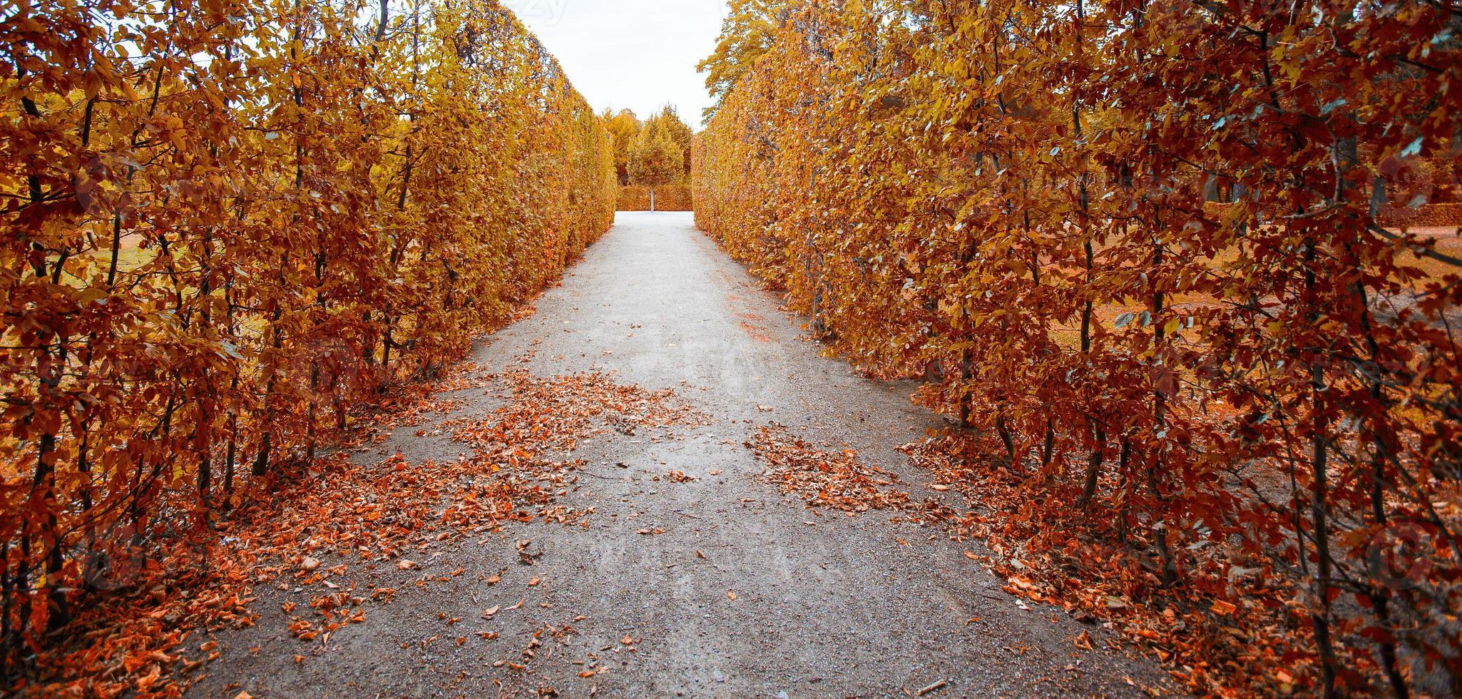 floresta de outono, floresta em cores de outono foto