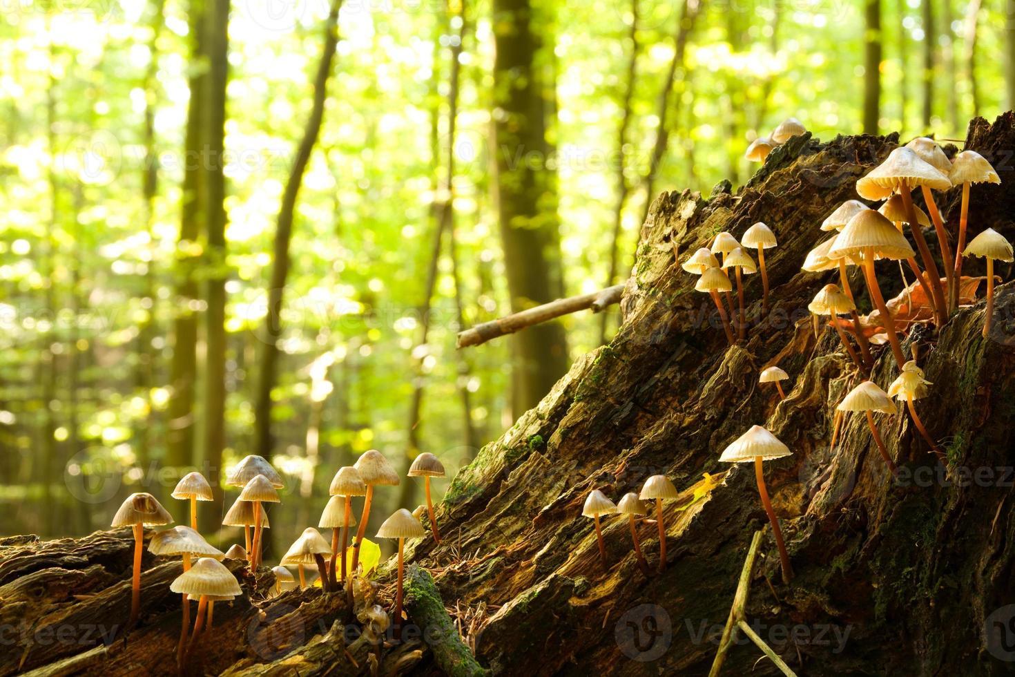fungos da floresta foto