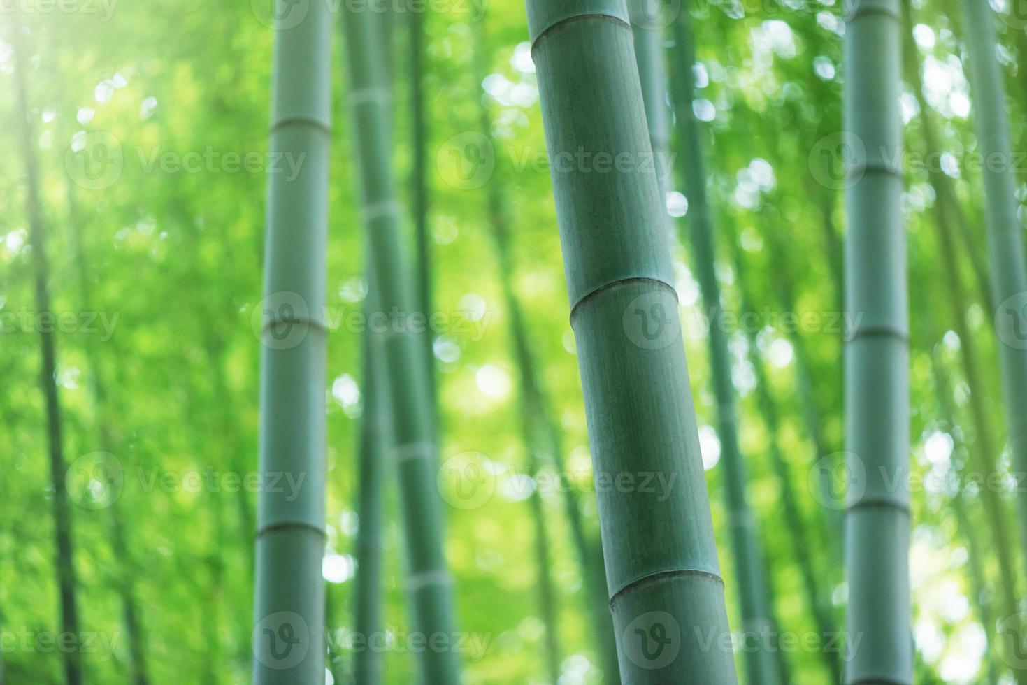 floresta de bambu foto