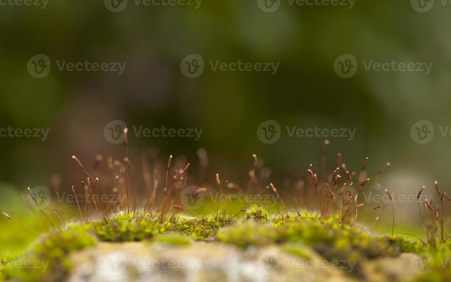 floresta frágil. foto