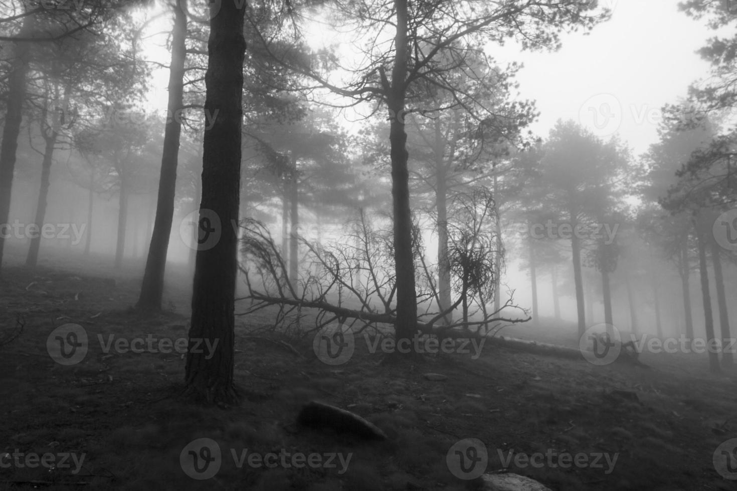 floresta enevoada foto