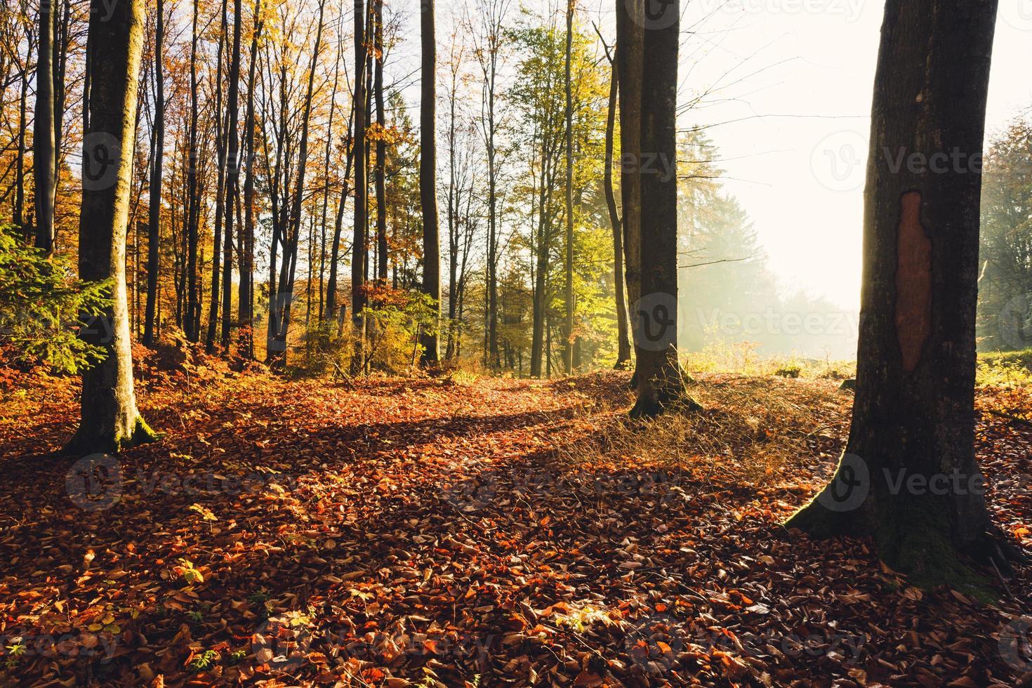 floresta de outono foto