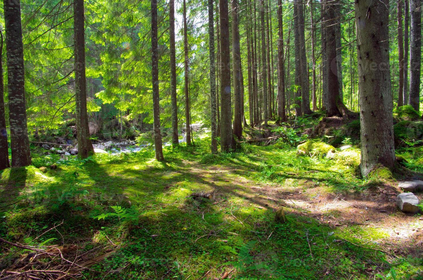 árvores da floresta foto