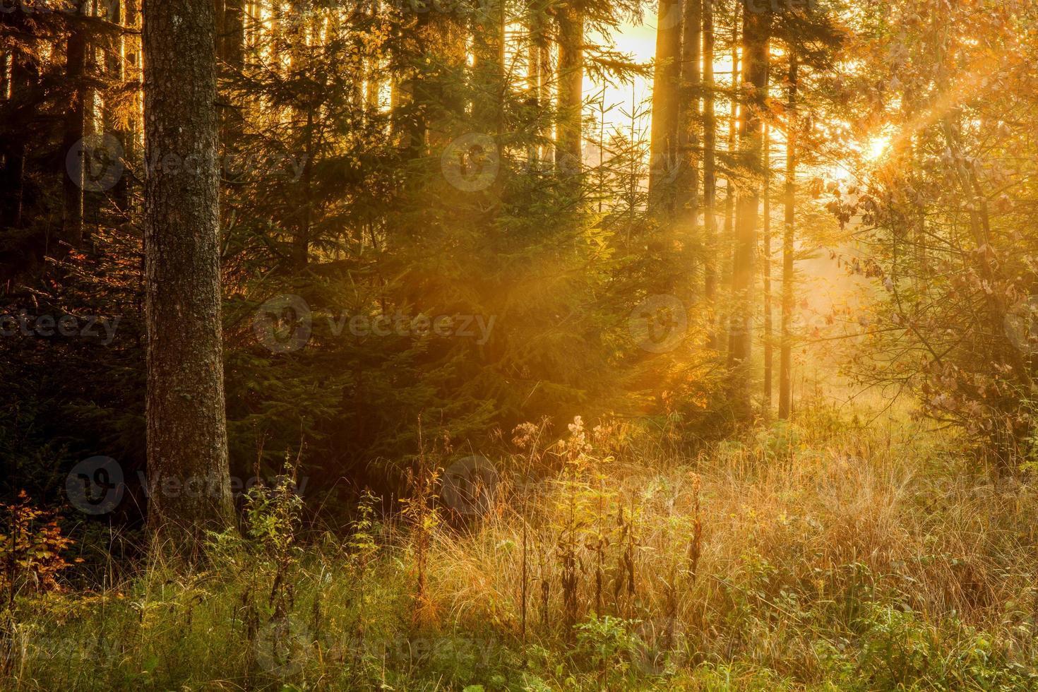 floresta Negra foto