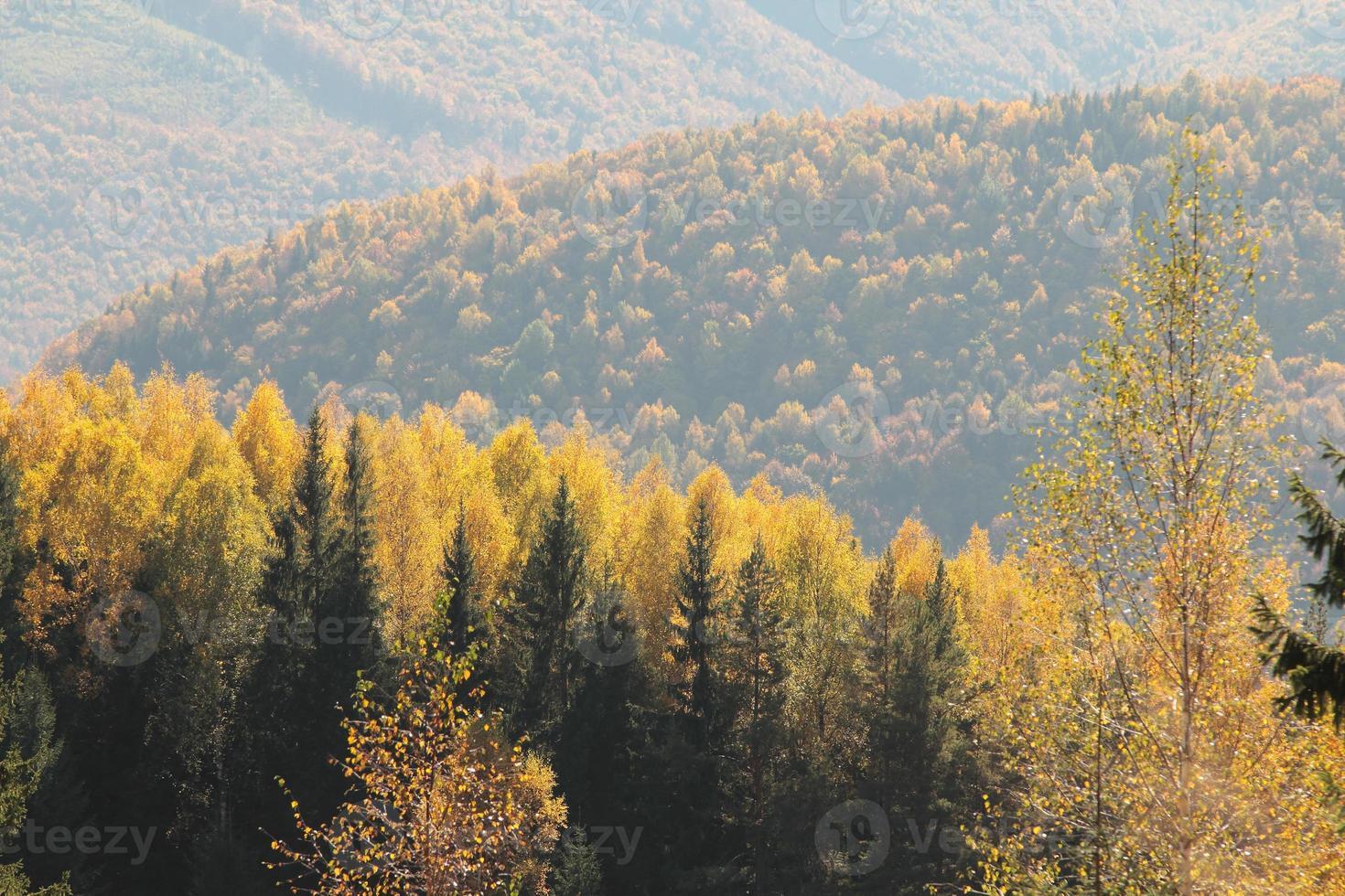 floresta dos cárpatos de outono foto