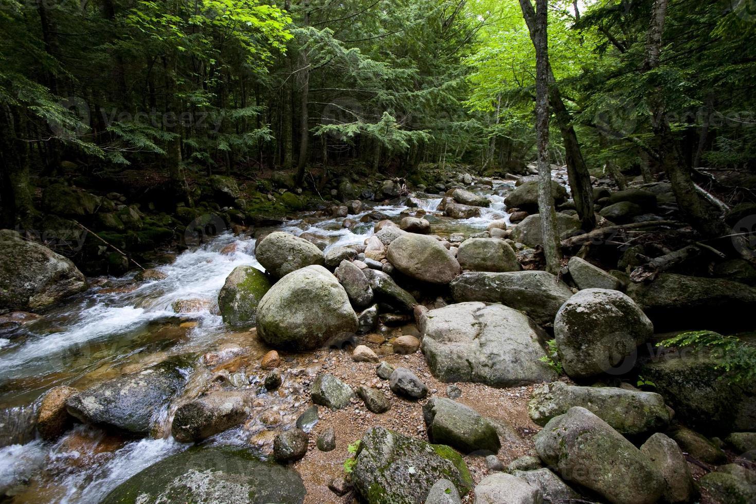 riacho e floresta foto
