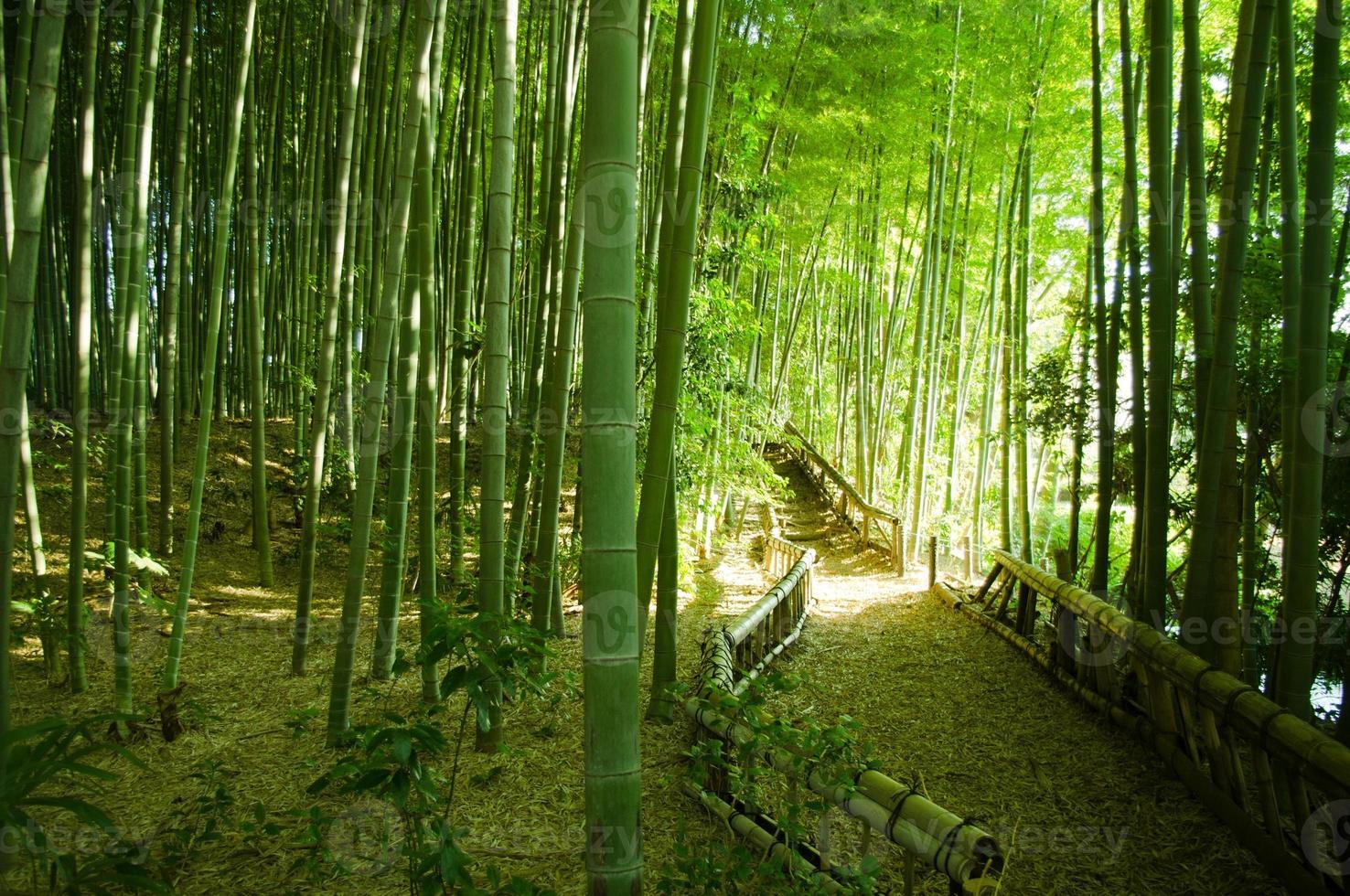 caminho da floresta de bambu foto
