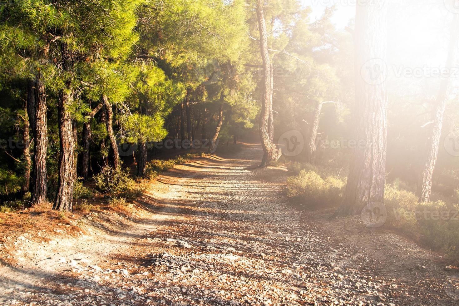 caminho de caminhada na floresta foto