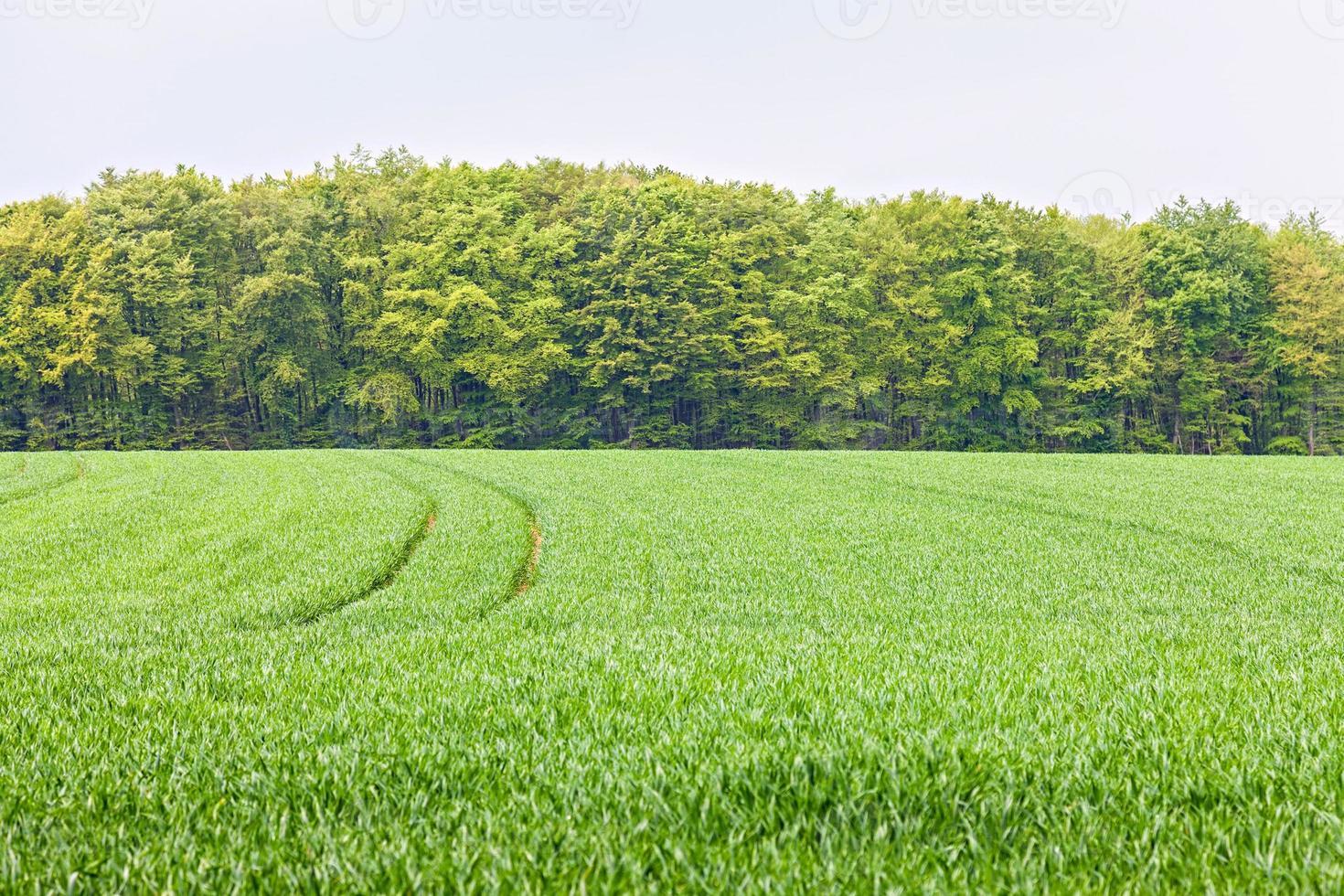 campo e floresta foto