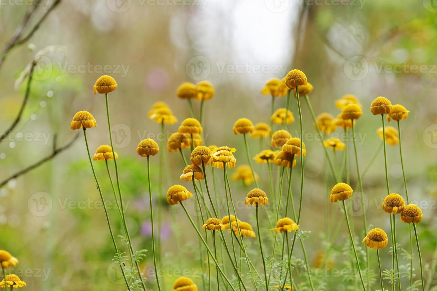 flores na floresta foto