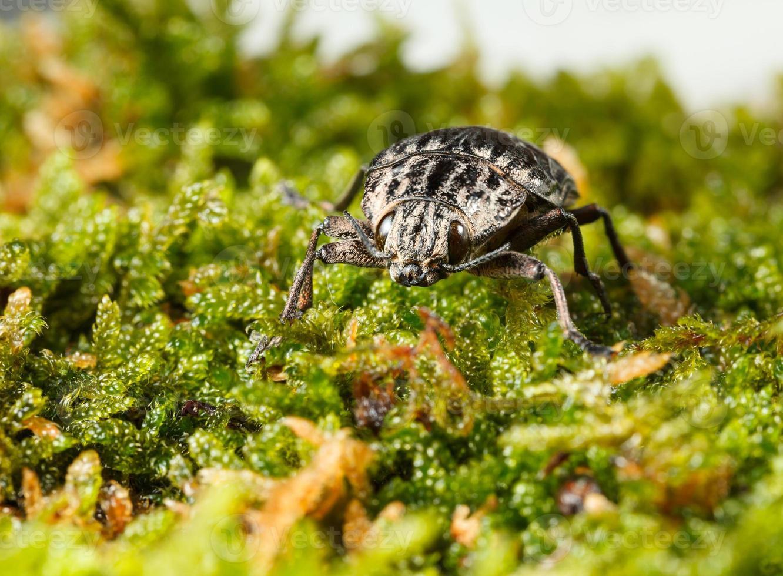 besouro no chão da floresta foto
