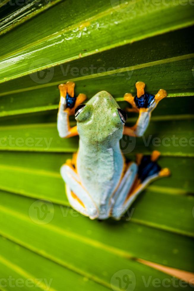 tema floresta tropical foto