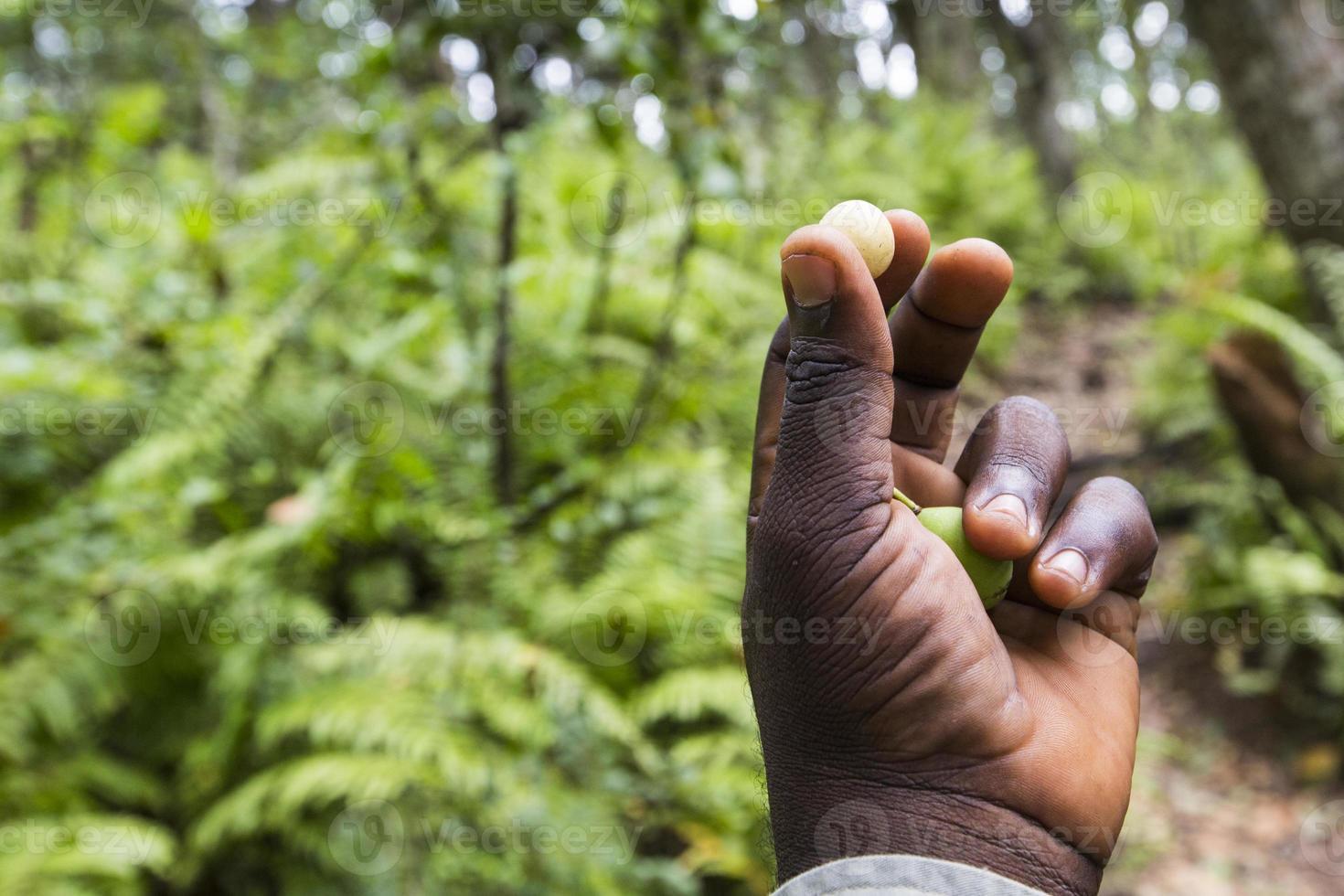 floresta jozani, zanzibar, tanzânia foto