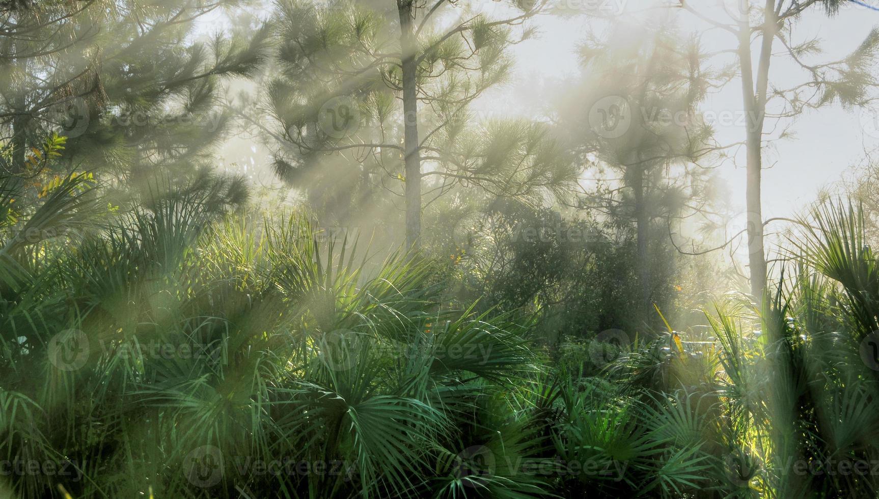 floresta de palmeiras foto