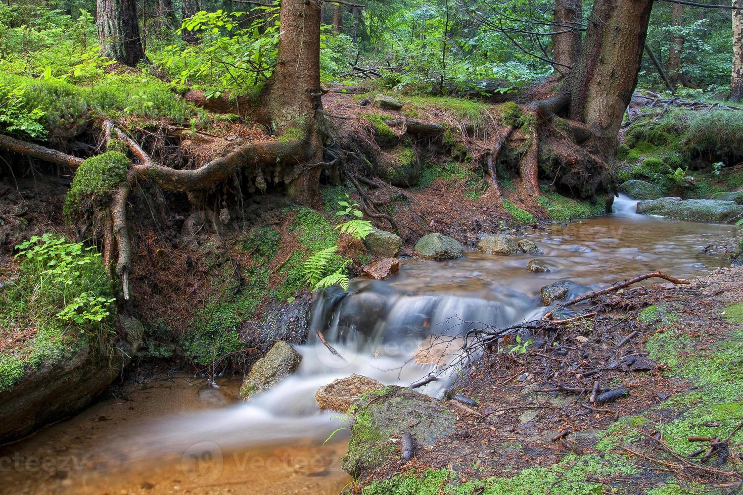 riacho da floresta foto