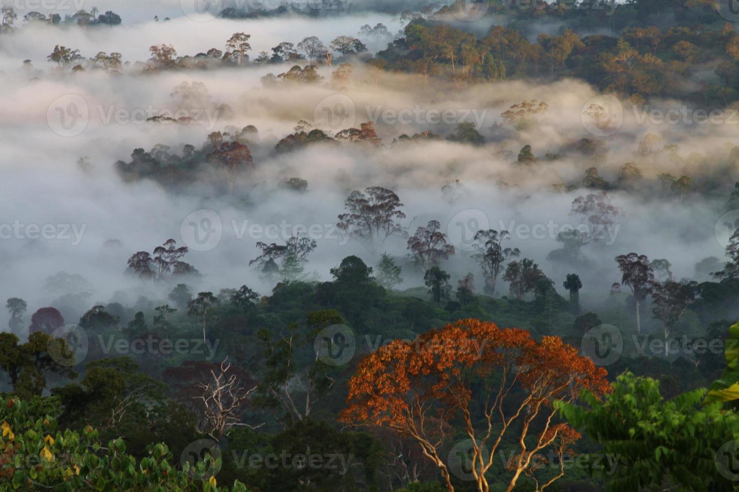 floresta nublada foto