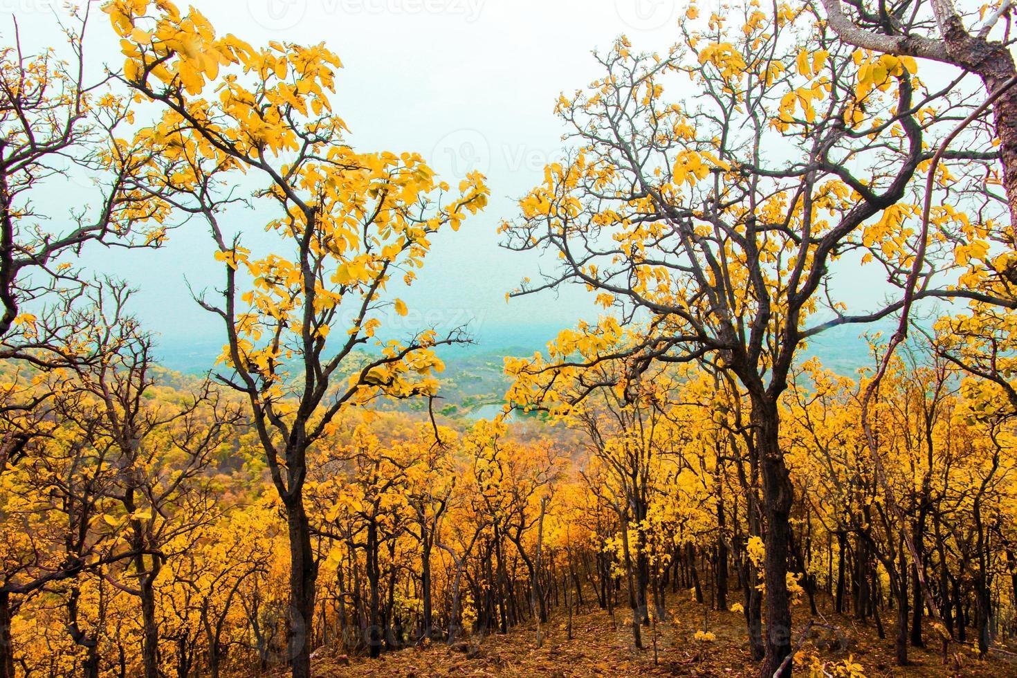 montanhas da floresta foto