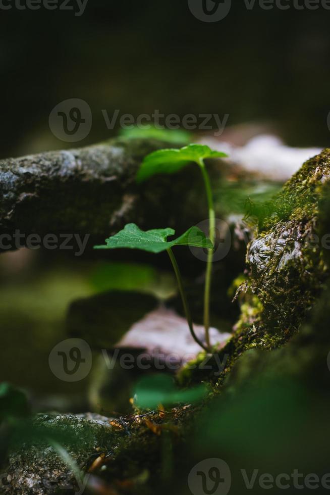 detalhes na floresta foto