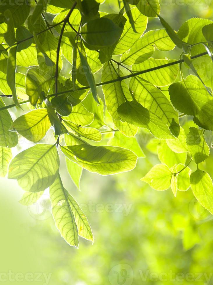 folhas frescas em uma floresta foto