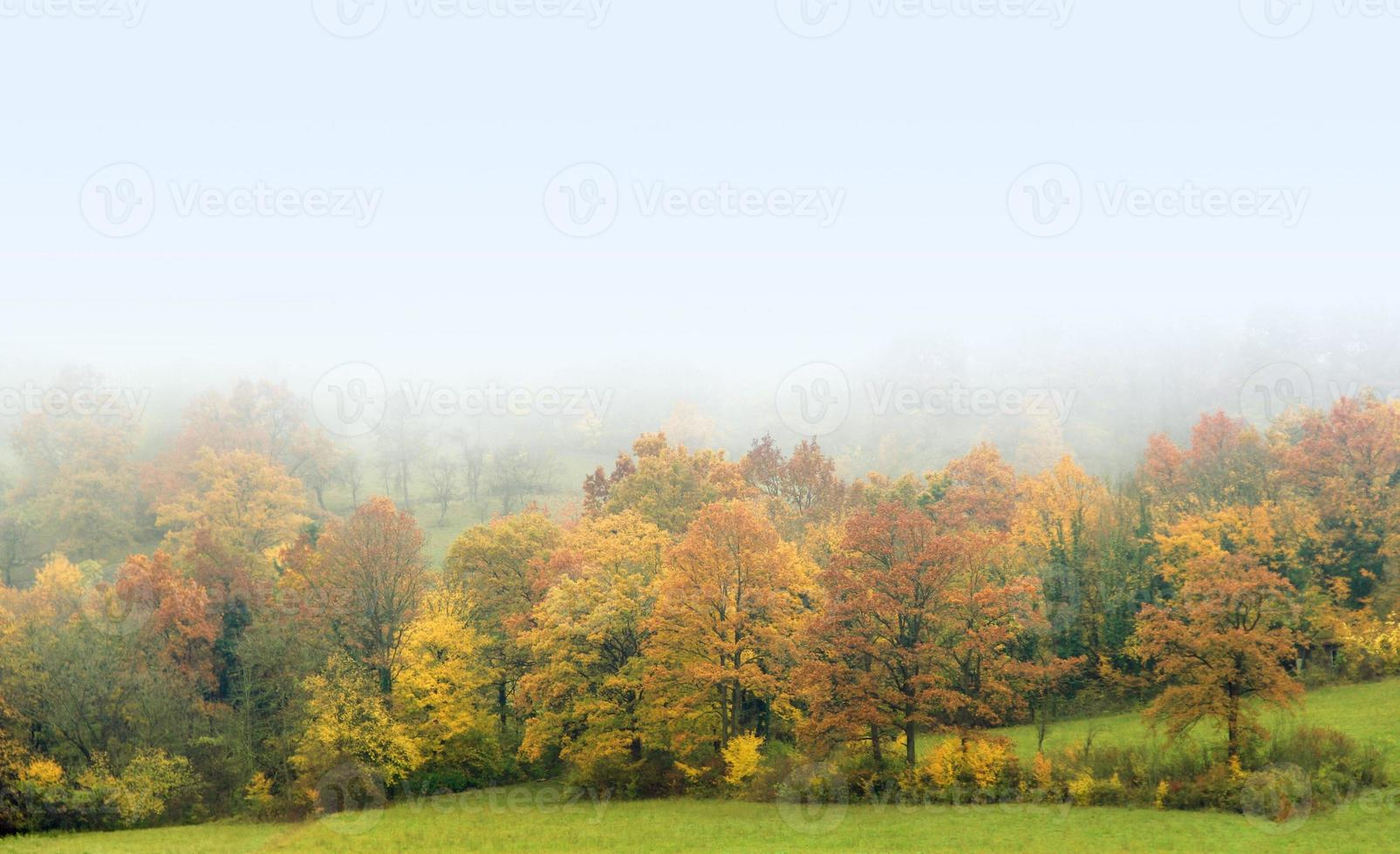 floresta nublada de outono foto