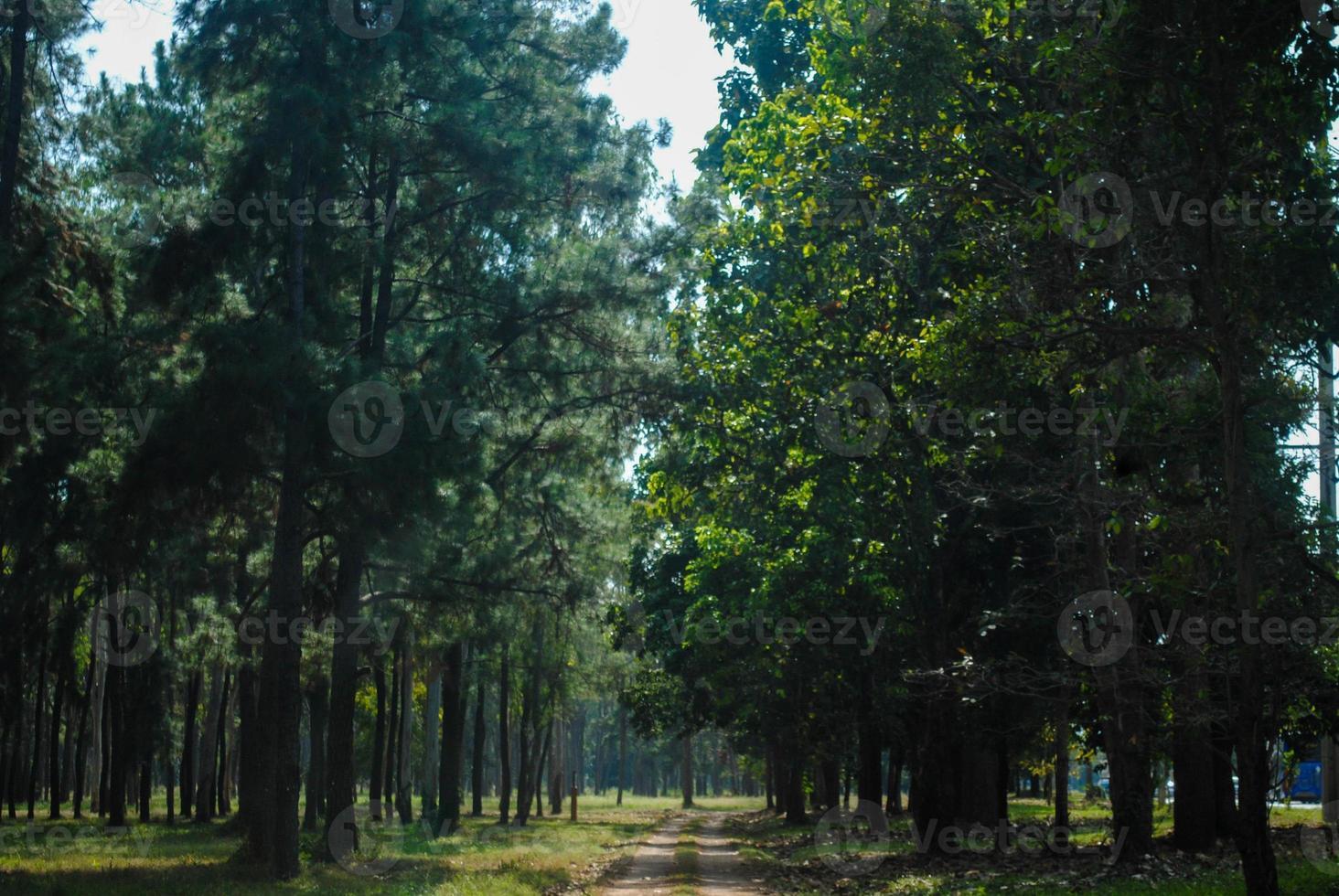 bela floresta verde na natureza. foto