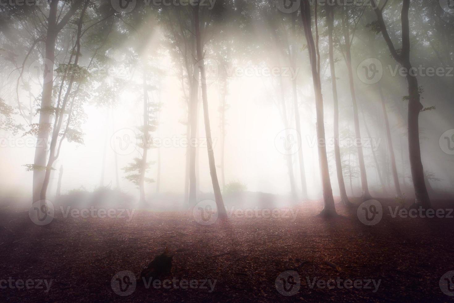 luz brilhante na floresta nebulosa foto