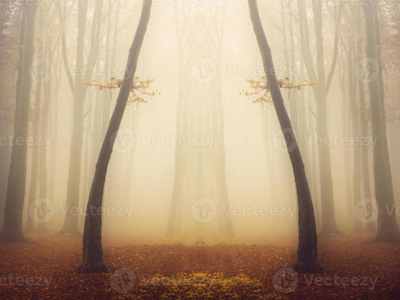 simetria mágica em floresta nebulosa foto