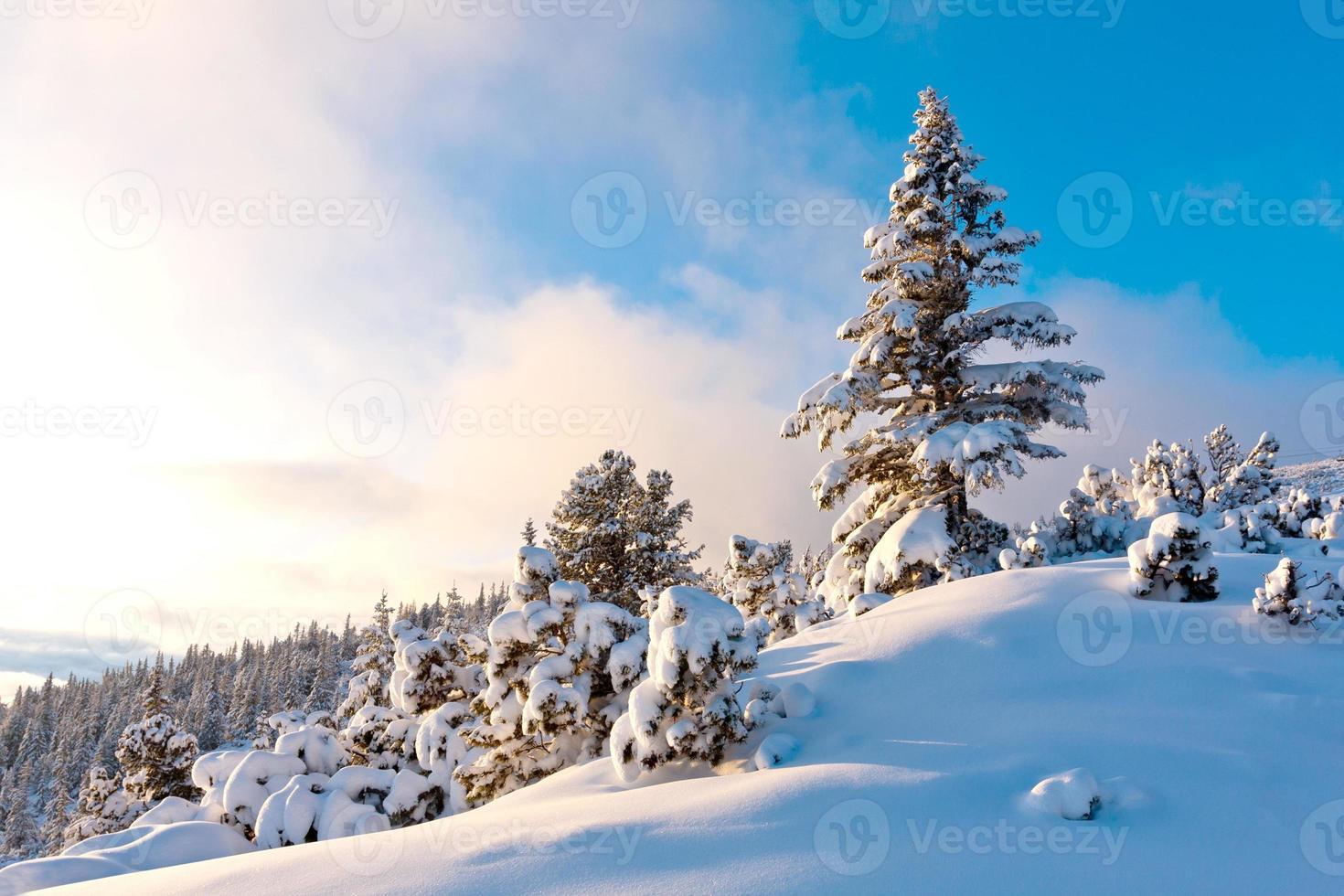 pinheiro agradável na floresta de inverno foto