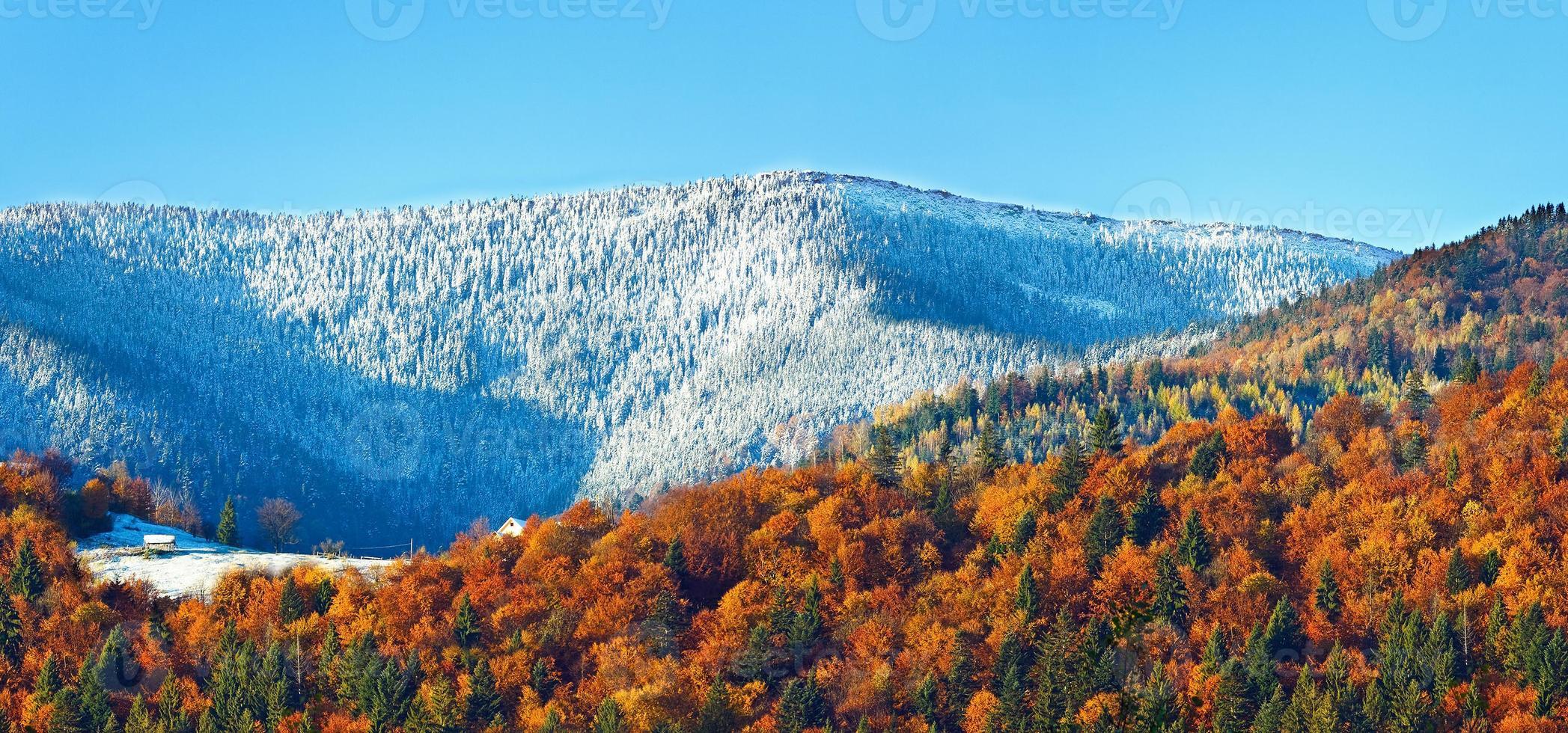 floresta de montanha de outono foto