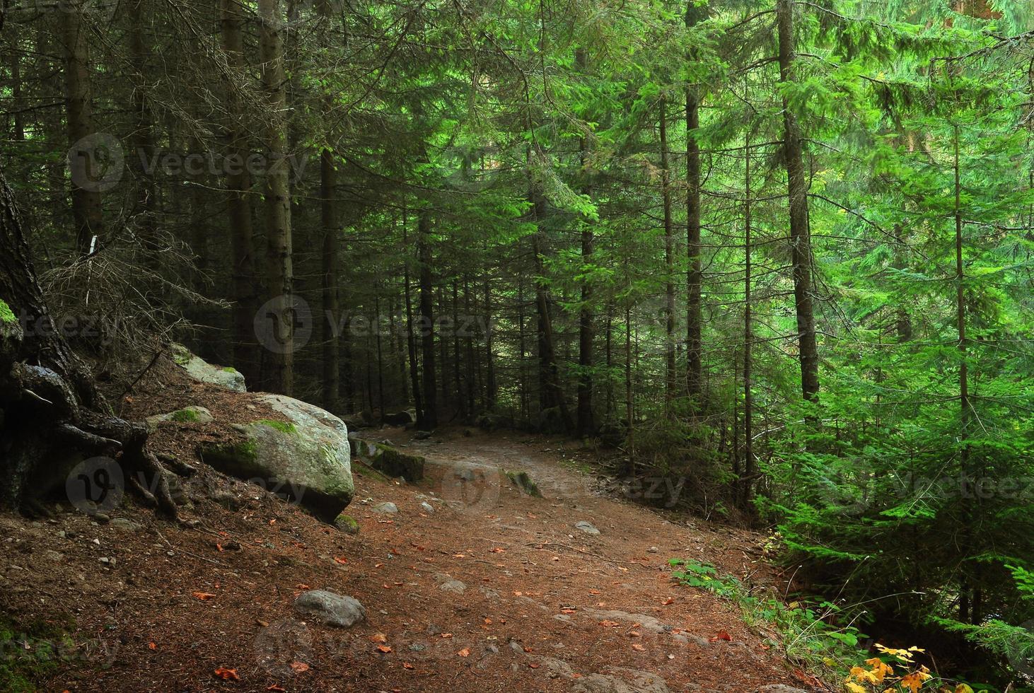 cores de outono na floresta foto