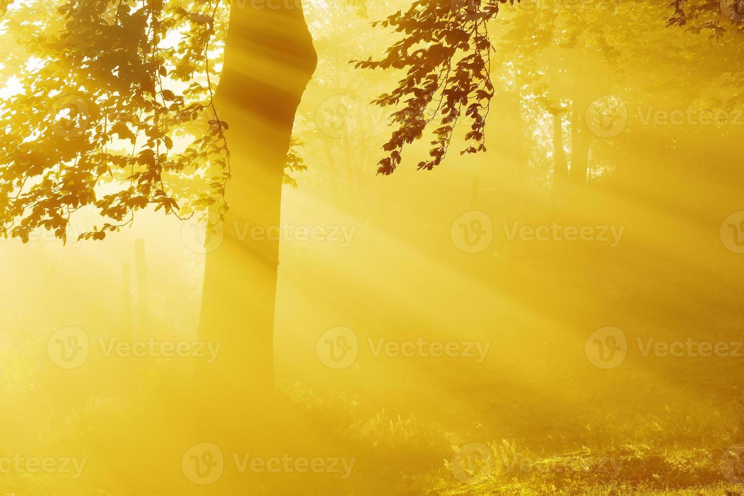 raios de sol na floresta foto