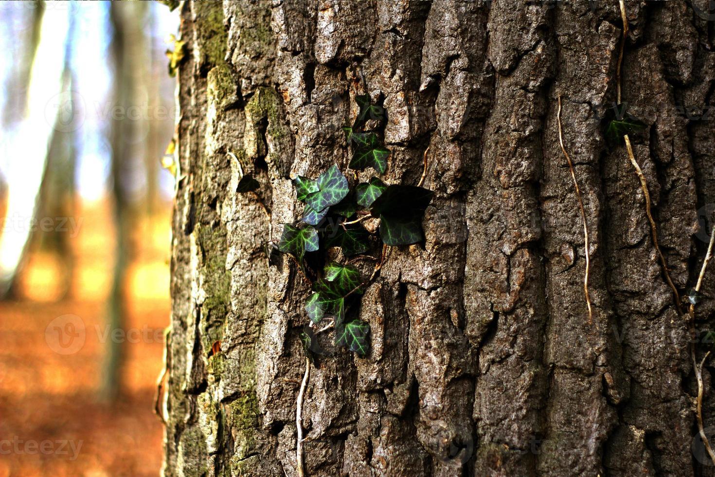 árvore na floresta foto