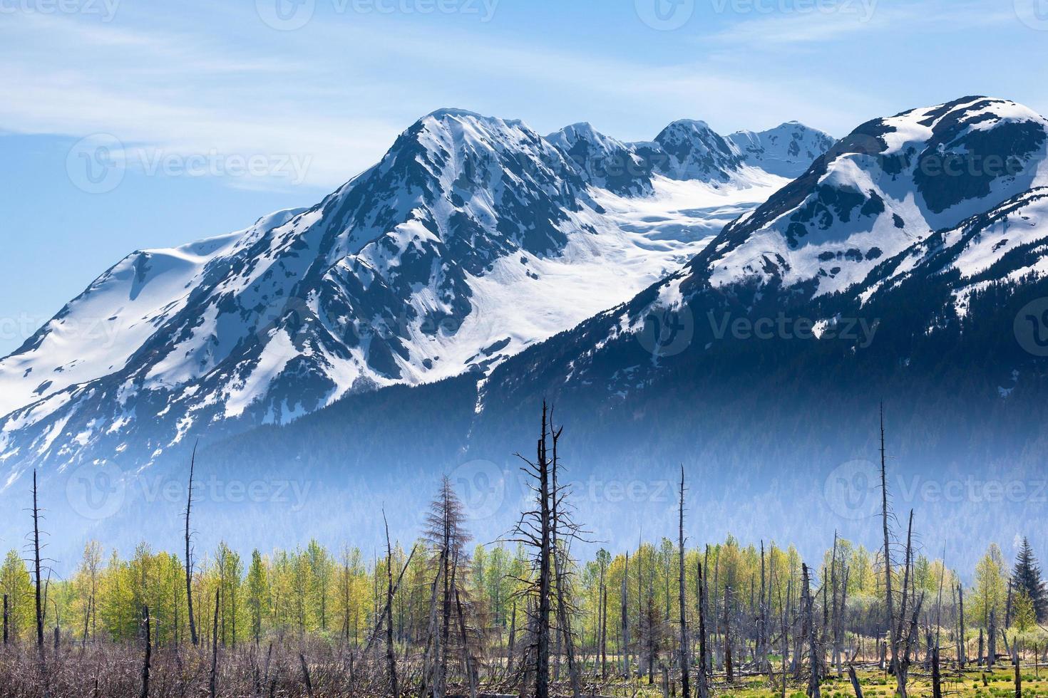 montanhas e floresta com nevoeiro foto