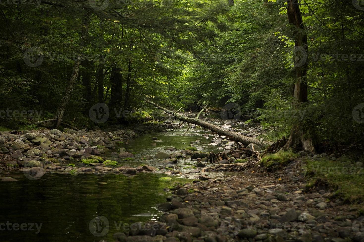 margem do rio no fundo da floresta foto