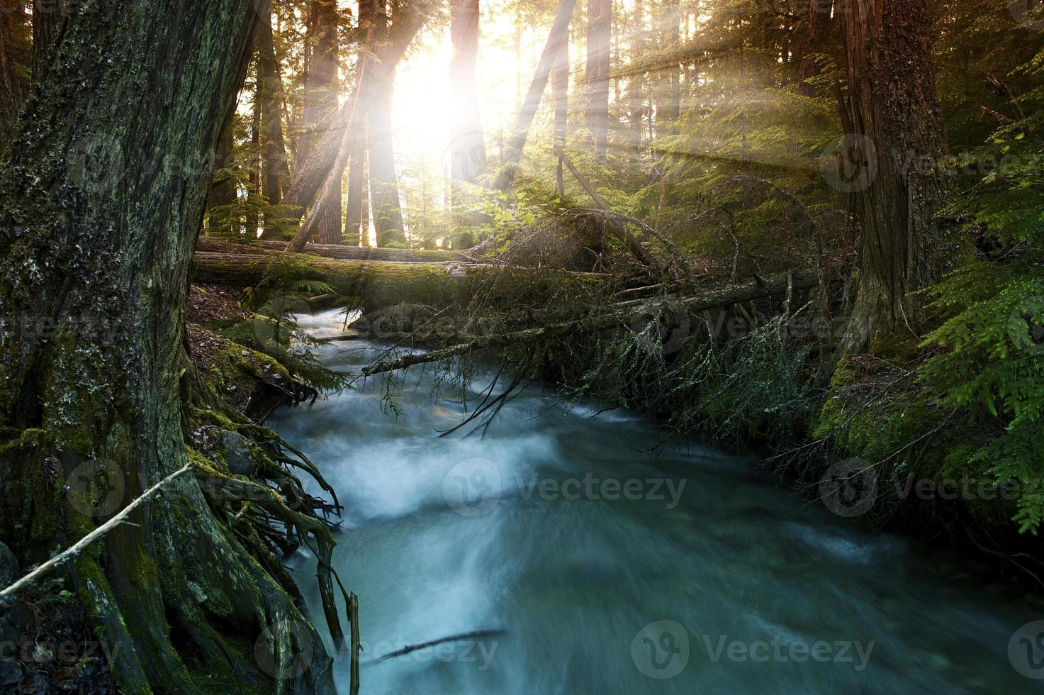 luz do sol na floresta foto