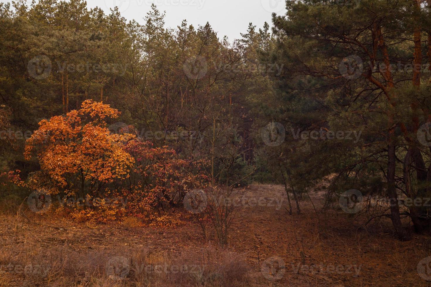 outono na floresta. pôr do sol foto