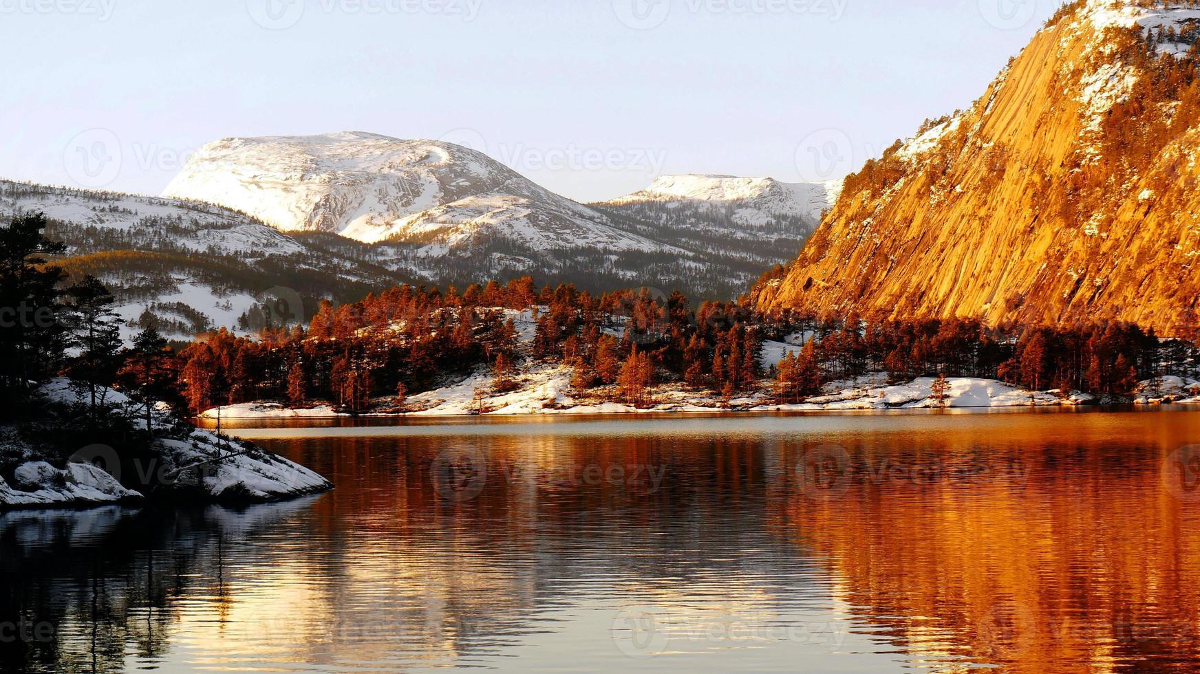 floresta de coníferas no lago foto