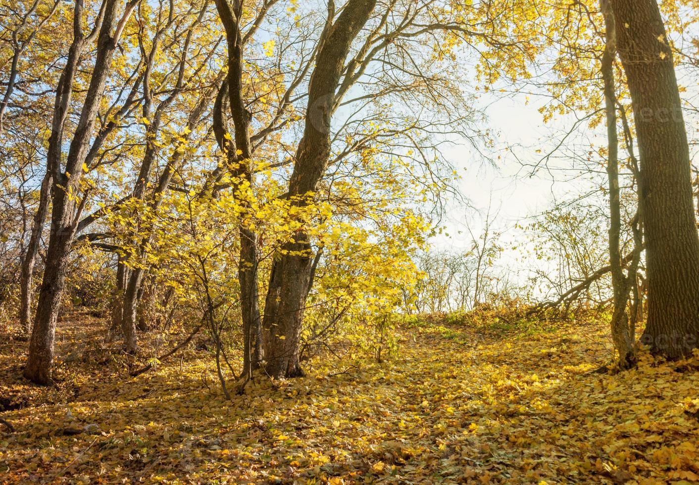 caminhar na floresta de outono foto