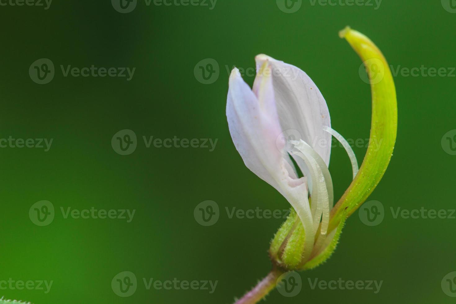linda flor selvagem na floresta foto